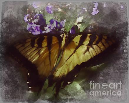 Misty Butterfly Garden by John Eide