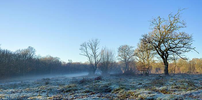 Stewart Marsden - Misty Clearing