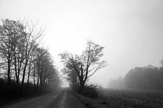 Misty Country Morning by Brooke T Ryan
