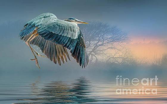 Misty Dawn Heron by Brian Tarr