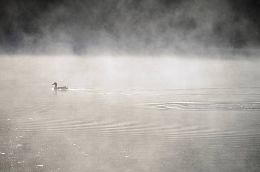 Misty Duck by Charles Bacon Jr
