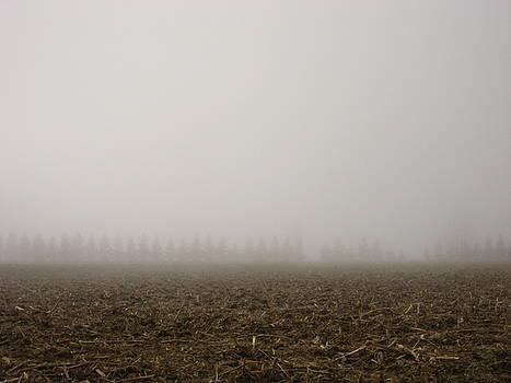 Misty Fields by Sheryl Burns