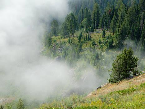 Jedediah Hohf - Misty Forest