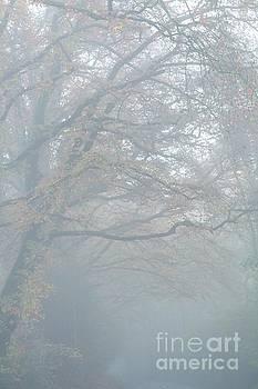 Misty  by Gary Bridger