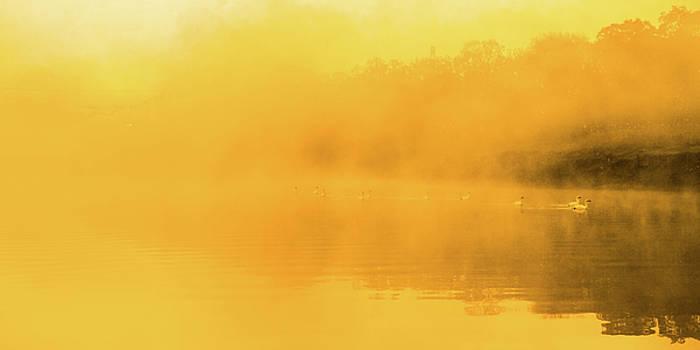 Tatsuya Atarashi - Misty Gold