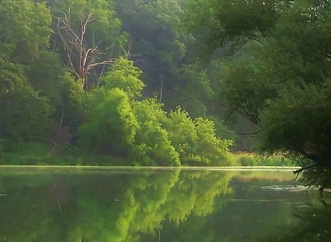 Misty Green Morning by Lori Frisch