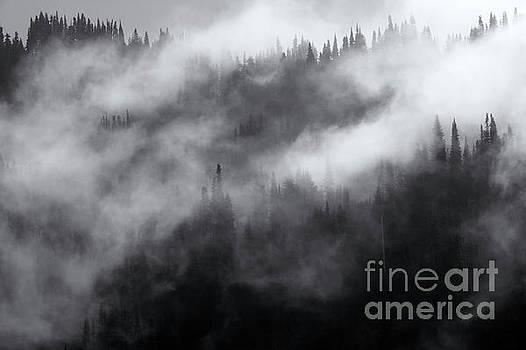 Misty by Mike Dawson