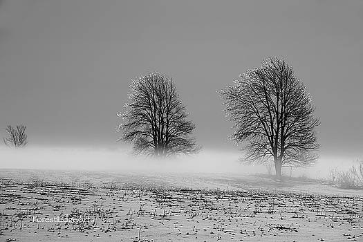 Misty Morn by Dick Bourgault