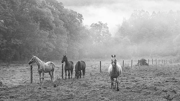 Misty Morning Horses by Frank Morales Jr