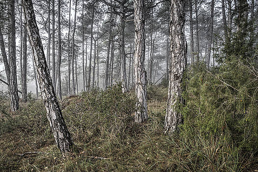 Misty Morning in Baronia de Rialb Catalonia by Marc Garrido