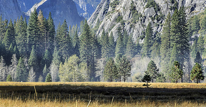 Misty Morning in Yosemite Valley by Focus On Nature Photography