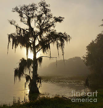Misty Morning Lakeside by John Eide