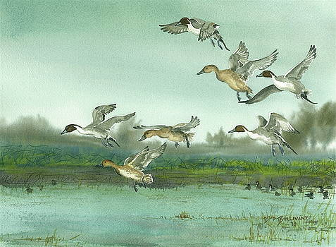 Misty Morning Pintails by Bud Bullivant