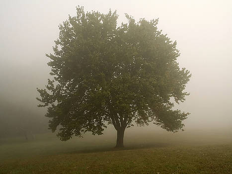 Misty Morning Tree by Andrew Kazmierski