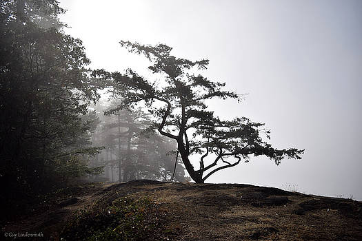 Misty Morning Tree by Guy Lindenmuth