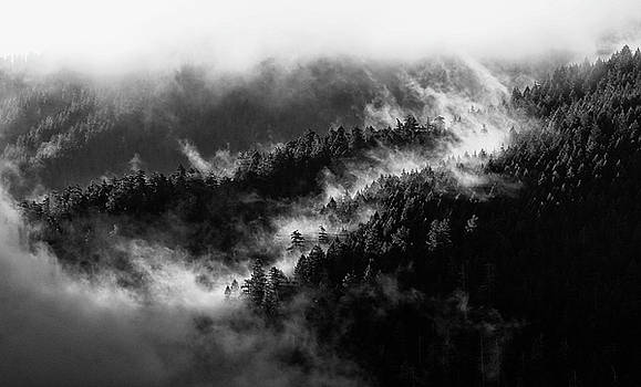 Misty Mountain Pines by Michael Hope