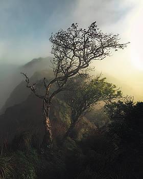 Misty Na Pali by Tor-Ivar Naess