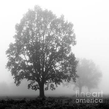 Misty oaks by Jaroslaw Suchozebrski