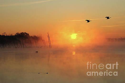 Misty Rise Fly Bye by Roger Becker