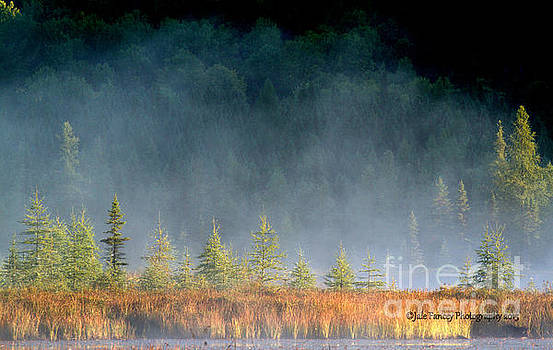Misty Sunrise at Costello Creek by Jale Fancey