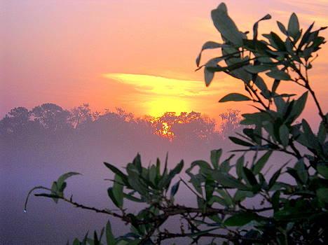 Misty Sunrise III by Ted Hebbler
