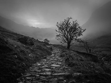 Misty Valley by David Attenborough