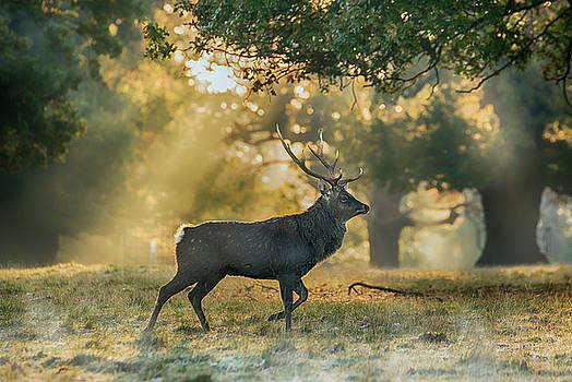 Misty Walk by Scott Carruthers