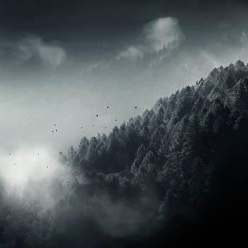 Misty Woodlands by Dirk Wuestenhagen