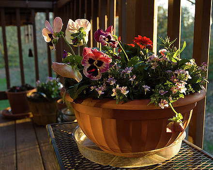 Mixed Basket, Balcony Garden, Hunter Hill, Hagerstown, Maryland, by James Oppenheim