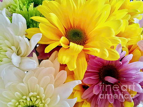 Mixed Daisies Bouquet by Margaret Newcomb