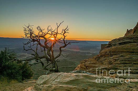 Moab Tree by Kristal Kraft