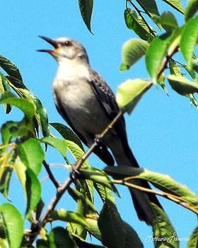 Mocking Bird 1 by Lorraine Louwerse