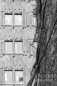 Modern and Nature by Ty Agha