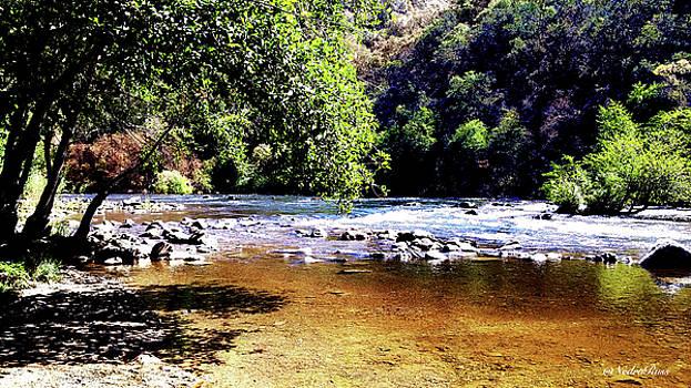 Moke River after the fire  by Nedra Russ
