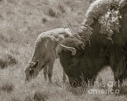 Mom And Baby Buffalo by Rebecca Margraf