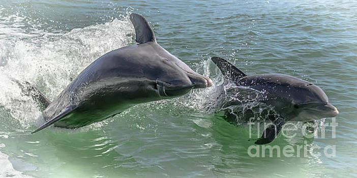 Mom and Baby Dolphin - 5400b by Debra Kewley