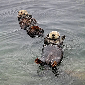 Art Block Collections - Mom and Juvenile Sea Otters