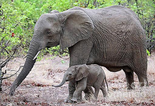 Mom and me, Africa wildlife by Wibke W