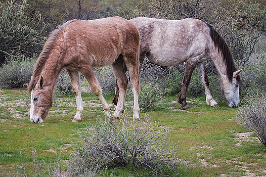 Rosemary Woods-Desert Rose Images - Mom and Youngster Grazing-img__6232-2017