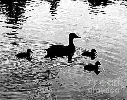 Momma and her Ducklings by Angela Weis