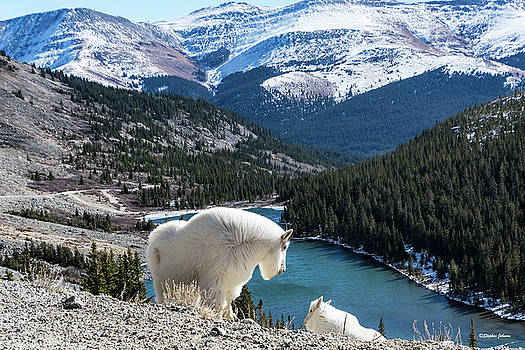 Momma Goat and Kid Overlooking Blue Lakes by Stephen Johnson