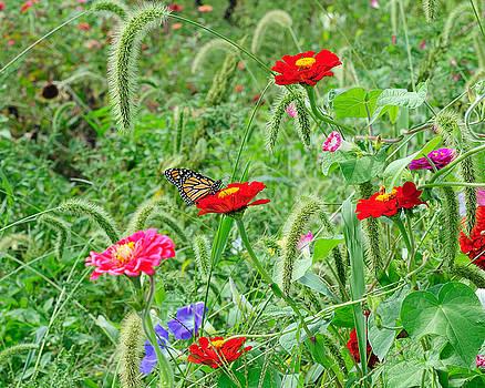 Edward Sobuta - Monarch and Flowers