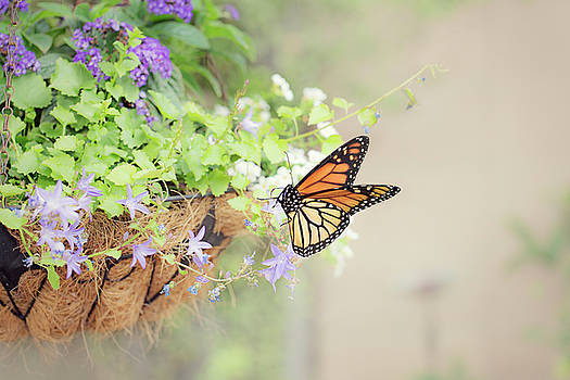 Monarch and Garden Basket by Susan Gary