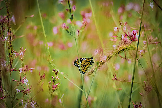 Monarch And Wild Flowers by Ray Congrove