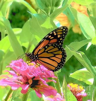 Monarch Beauty by Sandra McClure