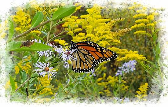 Joe Duket - Monarch Butterfly Among Goldenrod and Asters