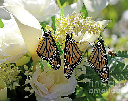 Monarch Butterfly Garden  by Luana K Perez