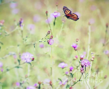Monarch Butterfly - In Flight Over the Knapweed by Kerri Farley