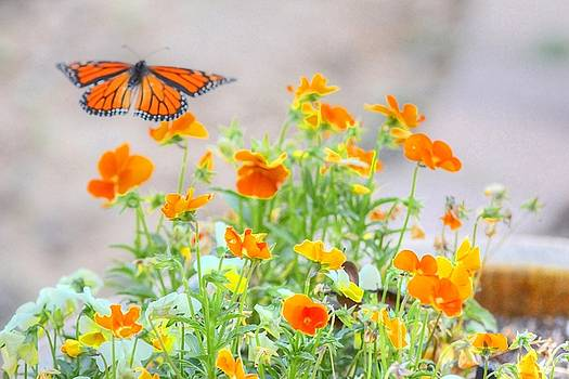 Monarch Butterfly in the Flowers by Liz Vernand