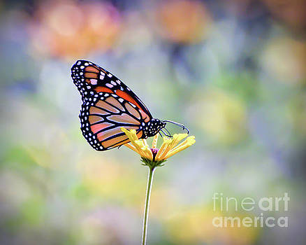 Monarch Butterfly -  In The Garden by Kerri Farley